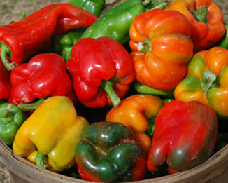 A variety of colorful sweet peppers