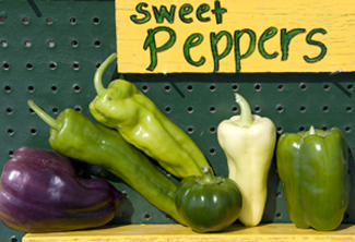 Sweet peppers at green-ripe stage